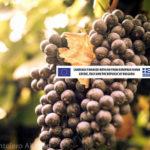 Vini Emiliani: alla riscoperta dello stile mediterraneo
